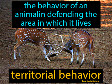 Territorial Behavior Science Definition