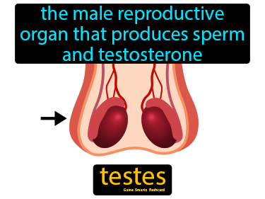 Testes Science Definition