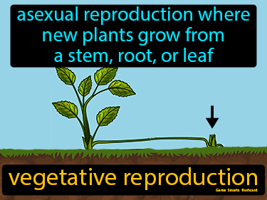 Vegetative Reproduction Science Definition