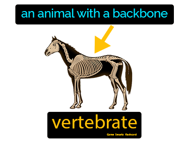 Vertebrate Science Definition