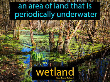 Wetland Science Definition