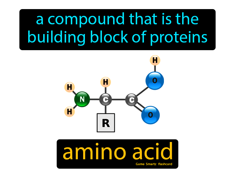 Amino Acid Definition: A compound that is the building block of proteins. Science.