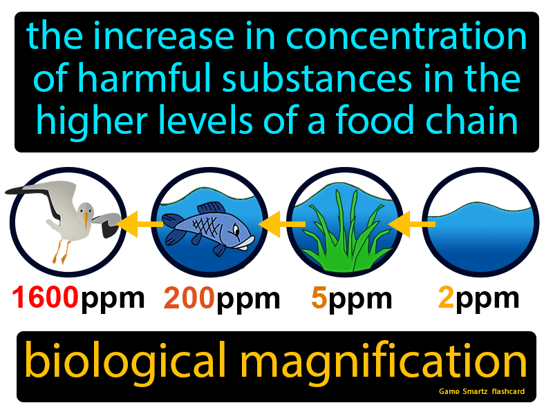 Biological Magnification Definition: The increase in concentration of harmful substances in the higher levels of a food chain. Biology