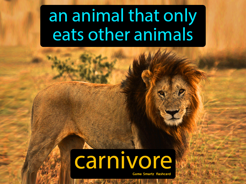 Carnivore Definition: An animal that only eats other animals. Biology