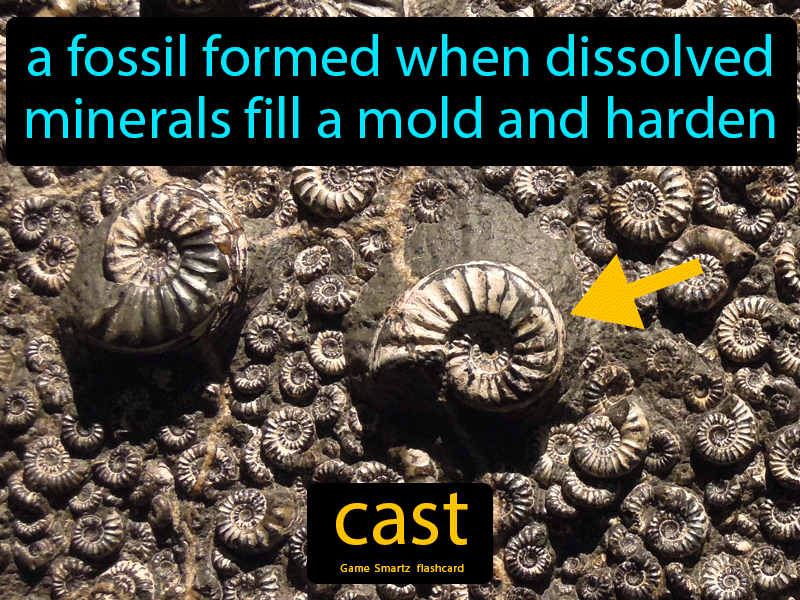 Cast Definition: A fossil formed when dissolved minerals fill a mold and hardens. Science.