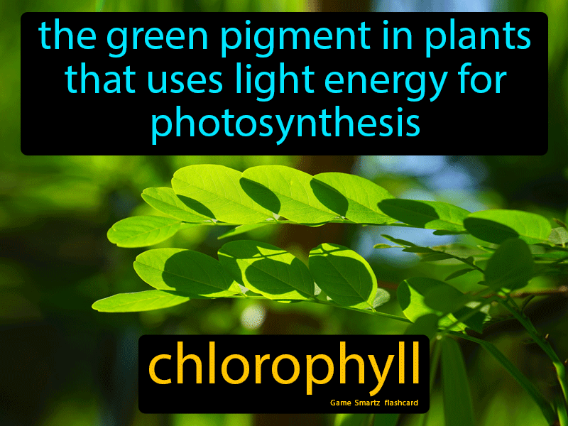 Chlorophyll Definition: The green pigment in plants that uses light energy for photosynthesis. Science.