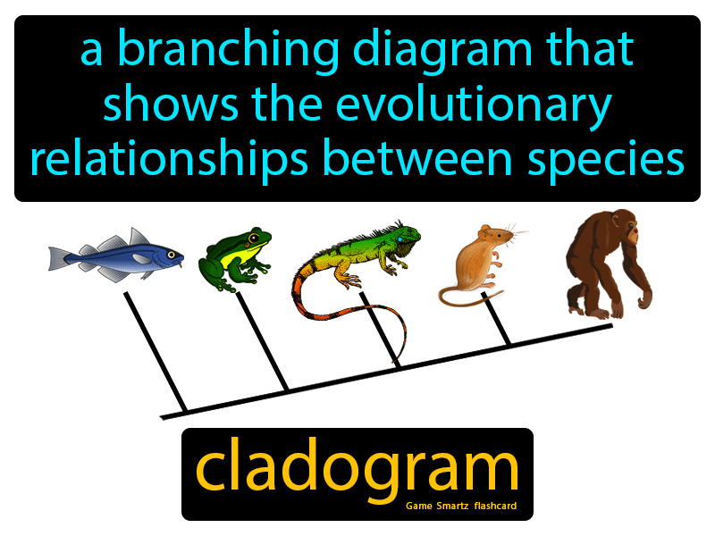 Cladogram Definition: A branching diagram that shows the evolutionary relationships between species. Science.