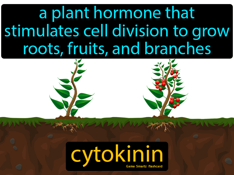 Cytokinin Definition: A plant hormone that stimulates cell division to grow roots, fruits, and branches. Science.