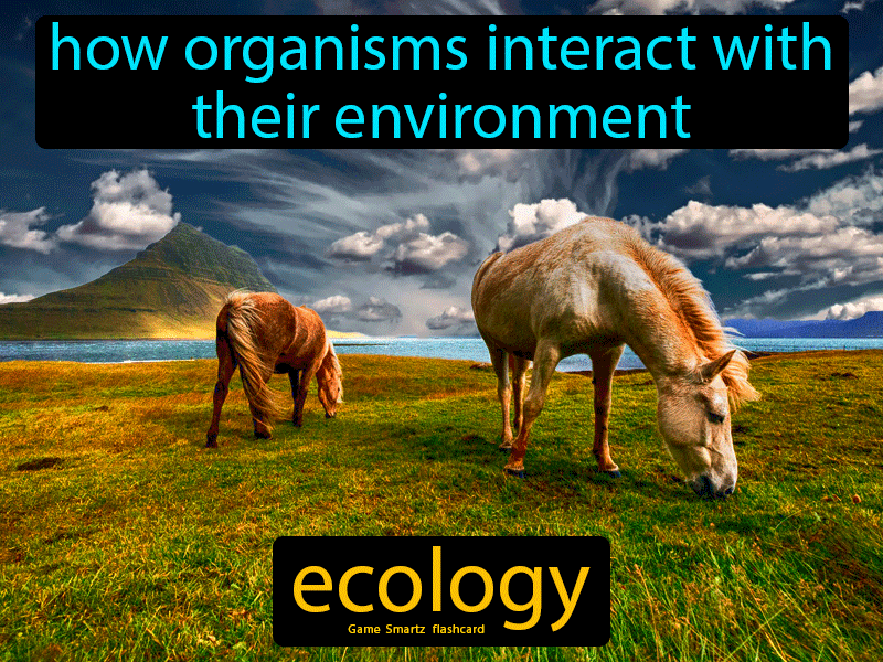 Ecology Definition: How organisms interact with their environment. Biology