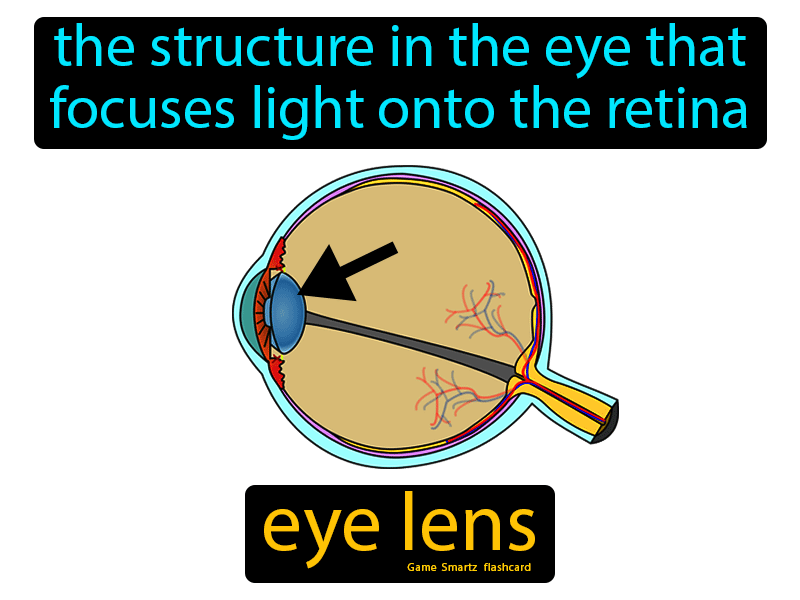 Eye Lens: The structure in the eye that focuses light onto the retina.