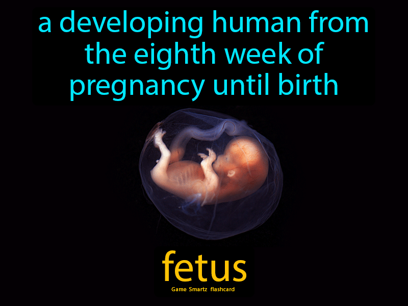 Fetus Definition: A developing human from the eighth week of pregnancy until birth. Biology