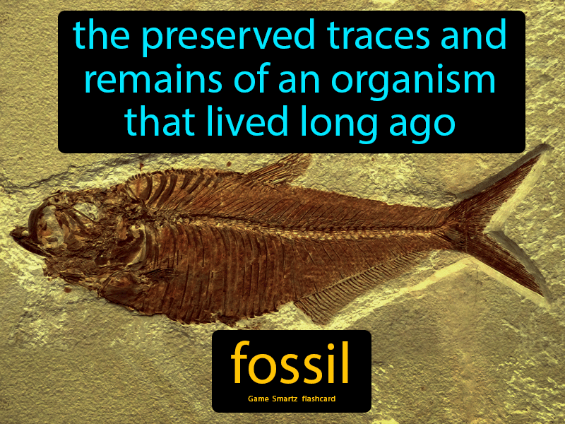 Fossil Definition: The preserved traces and remains of an organism that lived long ago. Science