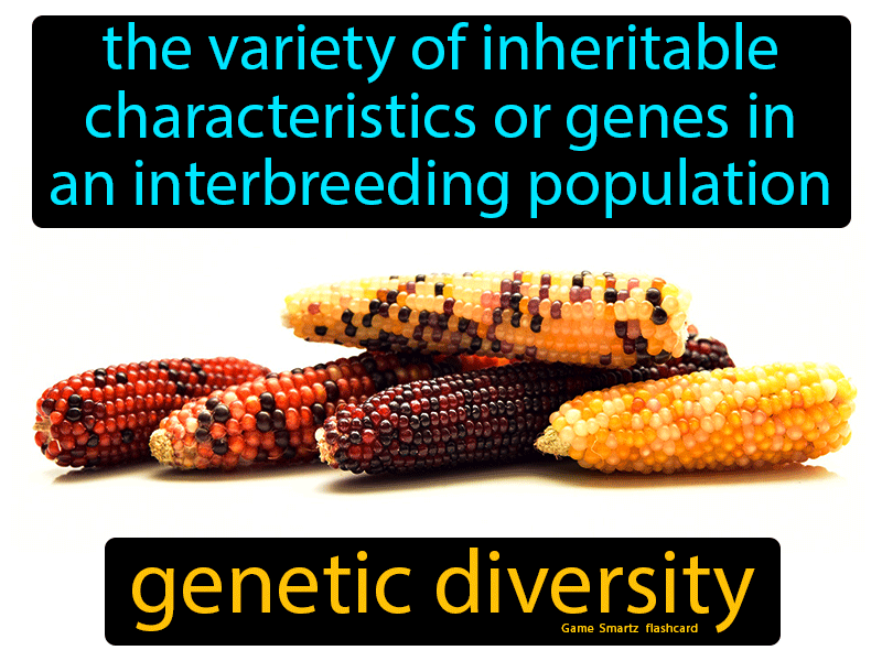 Genetic Diversity Definition: The variety of inheritable characteristics or genes in an interbreeding population. Biology
