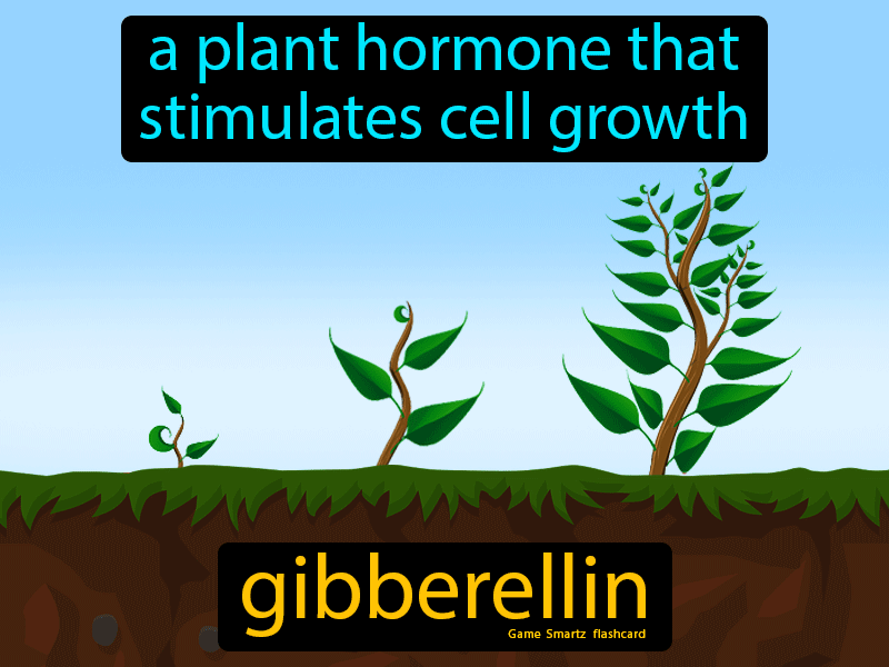 Gibberellin Definition: A plant hormone that stimulates cell growth. Science.