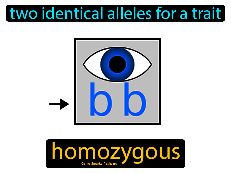 Homozygous Definition: Two identical alleles for a trait. Science.