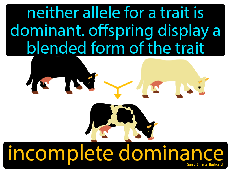 Incomplete Dominance Definition: Neither allele for a trait is dominant. Offspring display a blended form of the trait. Science.