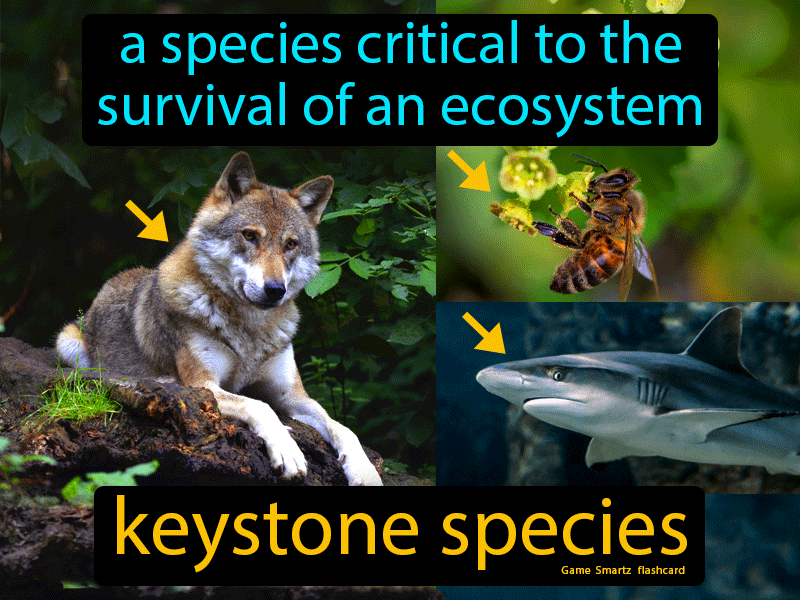 Keystone Species Definition: A species critical to the survival of an ecosystem. Science.