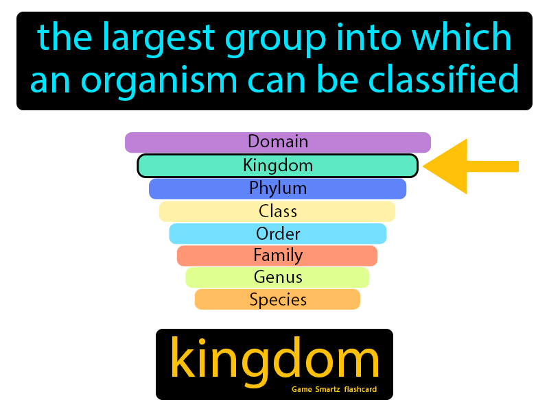 Kingdom, the largest group into which an organism can be classified.