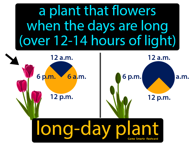 Long day plant, a plant that flowers when the days are long (over 12-14 hours of light).