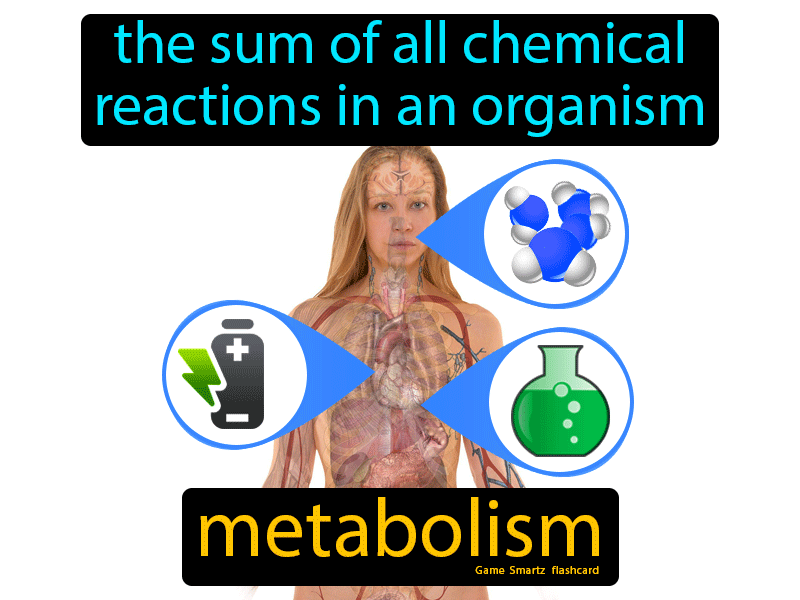 Metabolism with Definition