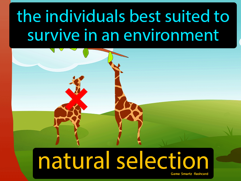Natural Selection - Easy to Understand Definition