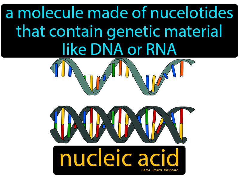 Nucleic acid, a molecule made of nucelotides that contain genetic material, like DNA and RNA.