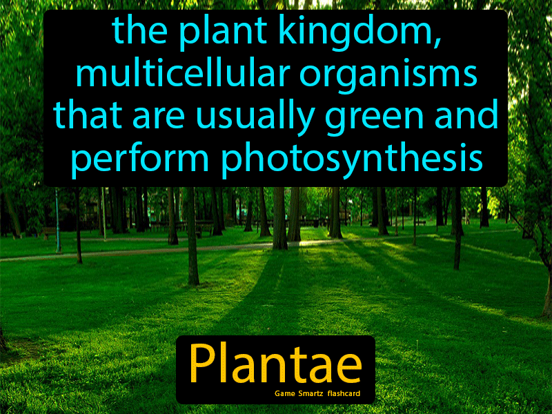 Plantae - Definition (Image) - Game Smartz Science