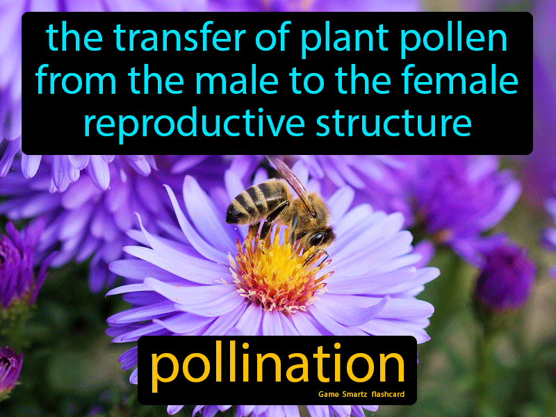 Pollination Definition