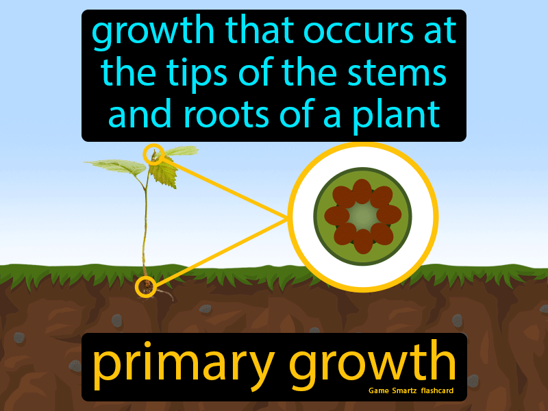 Primary Growth - Definition (Image) - Game Smartz Science
