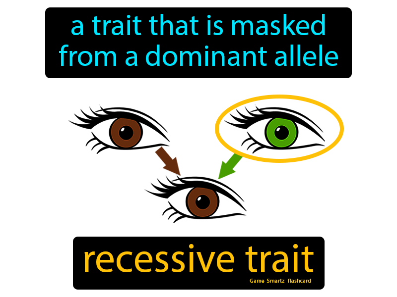 Recessive Trait Definition: A trait that is masked from a dominant allele. Science.