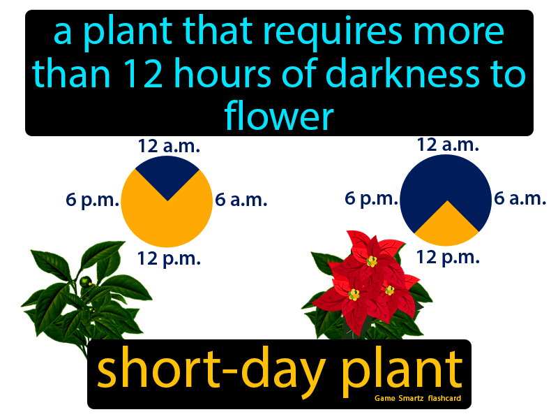 Short Day Plant Definition: A plant that requires more than 12 hours of darkness to flower. Science.