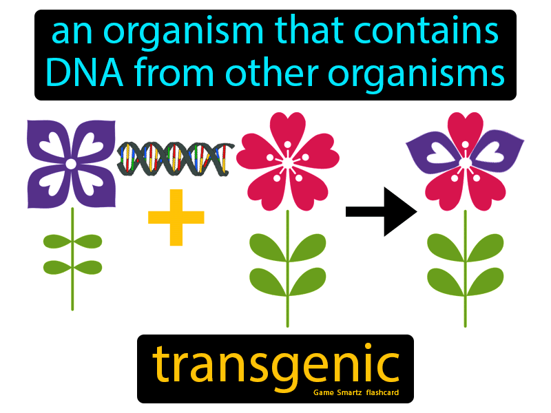 Transgenic Definition: An organism that contains dna from other organisms. Science.