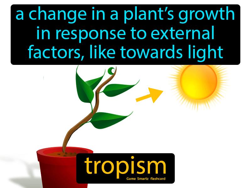 Tropism Definition: A change in a plant's growth in response to external factors, like growing towards the light. Biology